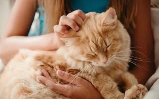 Доказательство любви вашего кота