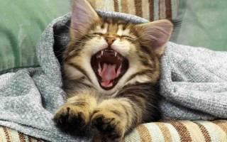 Что сделать, чтобы кот не будил вас с утра