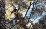 Спасатели сняли с дерева трусливую пуму