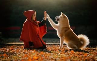 Осенняя фотосессия с домашними животными — примеры идей