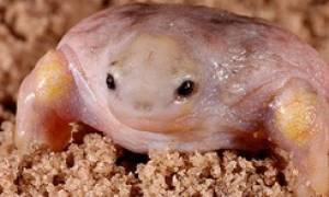 Фото, демонстрирующие, как выглядит черепаха без панциря