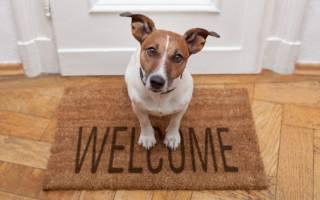 Самая неприхотливая порода собак — название и описание породы