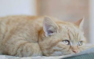 Причины депрессии у кошек и собак