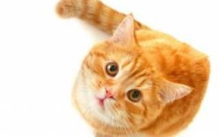 Почему нельзя фотографировать кошек
