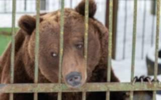 В Оренбургской области спасли трёх медведей от продажи на мясо