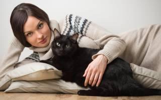 Приметы про окрас кошек: 5 основных