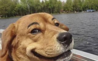 Забавные щенки на видео — лекарство от грусти