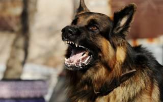 Как вести себя, чтобы агрессивная собака не напала