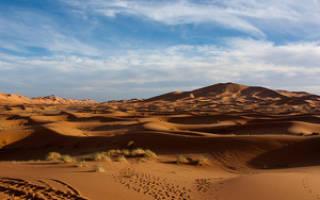 Как приспособились к жизни самые хитрые животные в пустыне, их фото и названия
