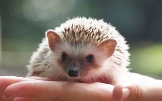 5 видов необычных домашних животных