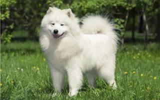 Причины, по которым собаке необходима кастрация