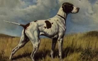Породы собак, которые уже исчезли с лица Земли