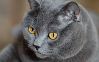 Пять редких окрасов кошек