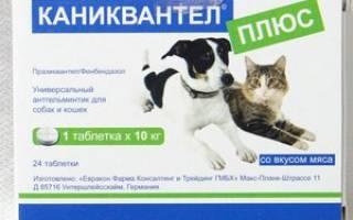 Особенности применения препарата и инструкция к «Каниквантел плюс» для лечения паразитов у собак и кошек