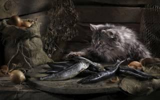 Давать ли кошке соленую рыбу, и какие могут быть последствия
