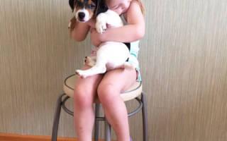 Как уговорить родителей купить собаку — практические советы