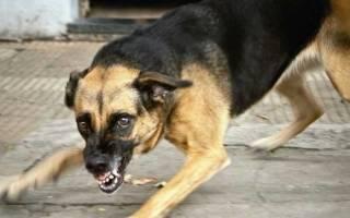 Cтоп стресс для собак: состав и форма выпуска, показания и инструкция по применению
