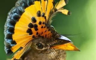 Семейство райских птиц: основные особенности, история, фото