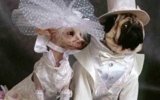 Свадьбы домашних животных — фото женихов и невест
