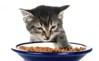 Почему кошки закапывают еду: основные причины, как отучить