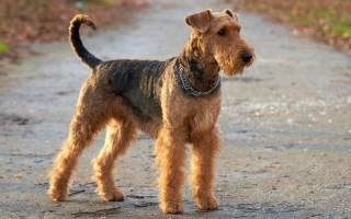 Породы собак, у которых отличное здоровье и сильный иммунитет от природы