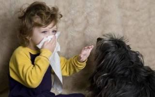 Гипоаллергенные собаки: список пород, рейтинг, какие подходят для детей