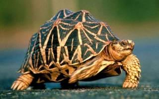 Кто быстрее черепаха или улитка