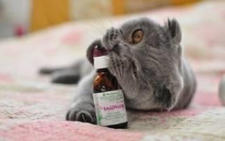 Воздействие валерьянки на кота: можно ли её давать им и не вредна ли она для них, советы ветеринаров