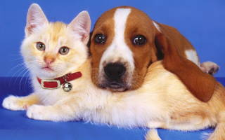 Ошибки при уходе за домашними животными