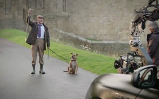 «Самая одинокая» собака Великобритании застряла в приюте