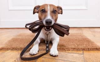 Чем может закончиться прогулка с собакой без намордника и как избежать неприятных последствий
