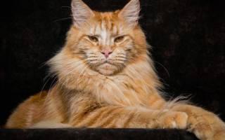 Фотографии и названия разных пород котов: особенности выбора котёнка, ухода и здоровья кошки