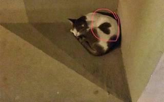 Бездомная кошка в Дубая просила не еды, а ласки