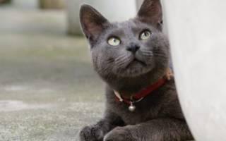 Как наказать кота за плохое поведение, если он нагадил, кусается и по иным причинам, чтобы он понял