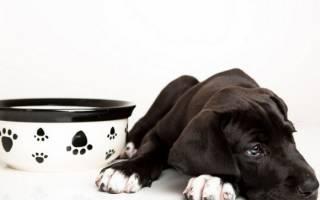 Что делать если собака не ест — возможные причины, когда стоит обратиться к ветеринару