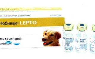 Нобивак dhppi: описание вакцины и её разновидности, инструкция и применение прививки lepto