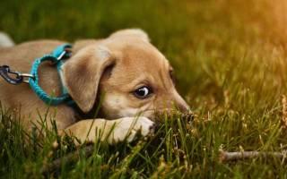 Учёные выяснили, что собаки реагируют на эмоции хозяев