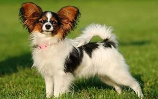 Самые красивые породы собак — топ 10 с фото