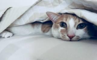 Странные привычки домашних кошек
