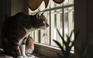 Почему кошка смотрит в окно