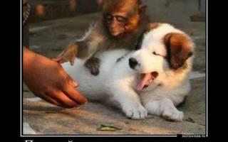Мемы про собак — подборка лучших