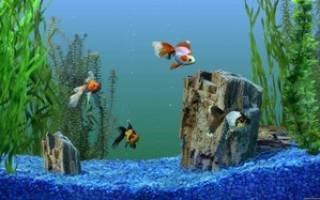 Почему мутнеет вода в аквариуме, даже если стоит фильтр: причины, что делать для решения проблемы и средства