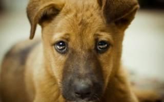 Как отучить щенка гадить дома — советы от специалиста