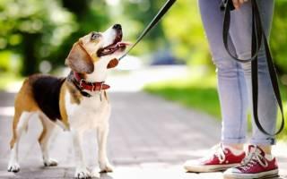 Где можно гулять с собакой в городе, а где нельзя