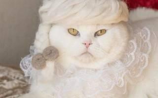 Японский фотограф делает котам шляпки из их меха