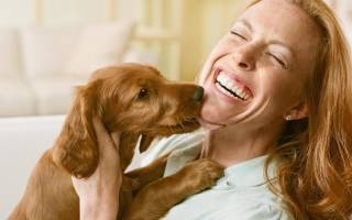 Зачем собаки лижут лицо хозяев