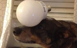 Собаки с прекрасным чувством баланса — фото
