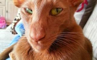 Кот из Новосибирска опекает сов, игуану, змей и мышей