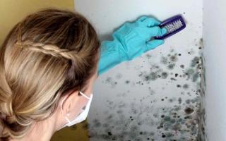 Плесень в доме: виды (черная и другие), чем опасна для здоровья, почему в квартире может появиться грибок, как она выглядит