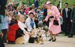 Любимые животные королевских семей